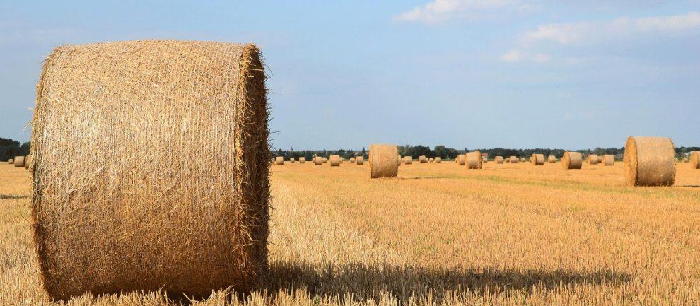Hitzerekorde und anhaltende Trockenheit haben beim Agribusiness im Jahr 2018 ihre Spuren hinterlassen.