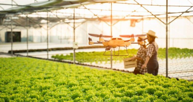 Drohne über Gemüsebeet