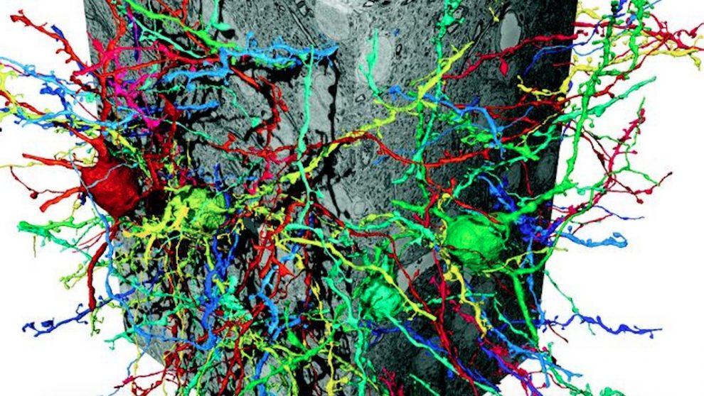 Künstliche neuronale Netze helfen Gehirn zu kartieren