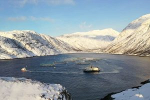 ABB Microsoft Künstliche Intelligenz Norway Royal Salmon