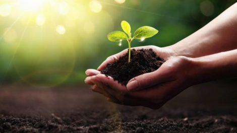 Deloitte Sustainability Studie Nachhaltigkeit