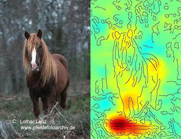 KI System Pferd neuronale Netze