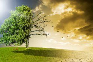 Ein halb toter und halb gesunder Baum auf einer Wiese