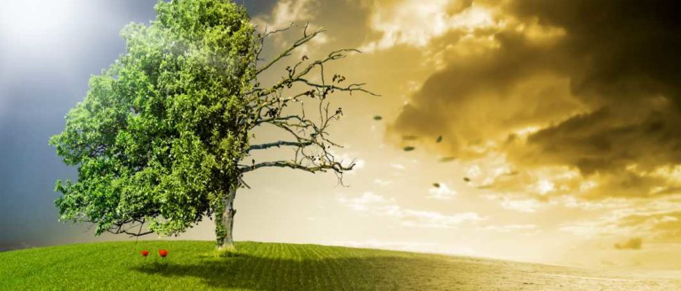 Ein halb toter und halb gesunder Baum auf einer Wiese als Symbol für den Klimawandel