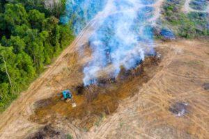 Waldrodung im tropischen Regenwald CO2